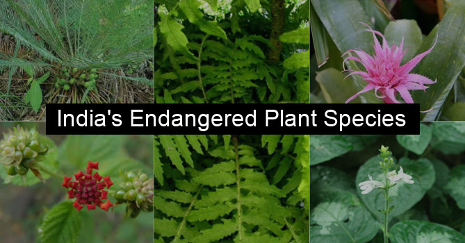 Endangered Plant Species in India
