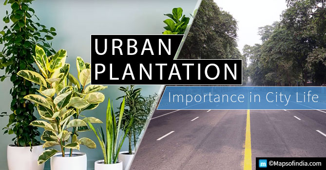 Urban Plantation- Importance in city life